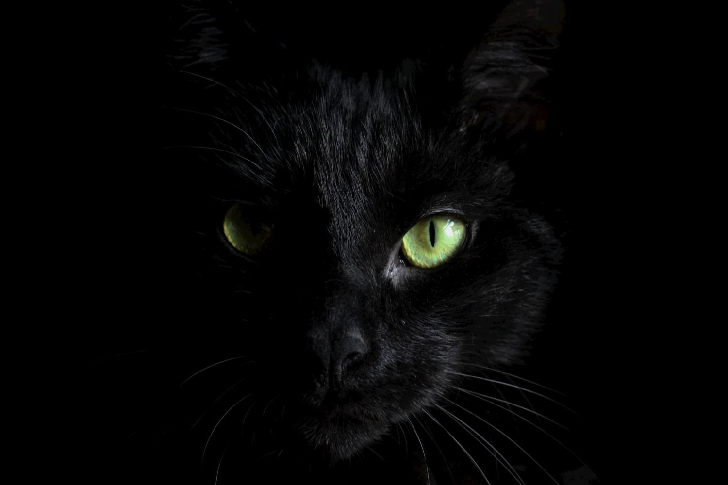 A cat in the darkness with greenish-yellow eyes